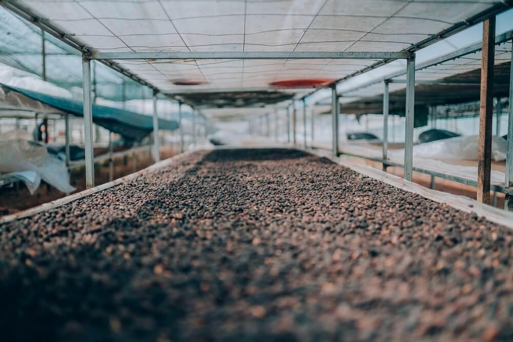 84 Coffee Kaffeebohnen trocknen