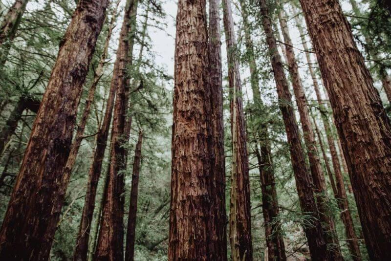 Durch Unterstützung von Sommer entstandener Wald