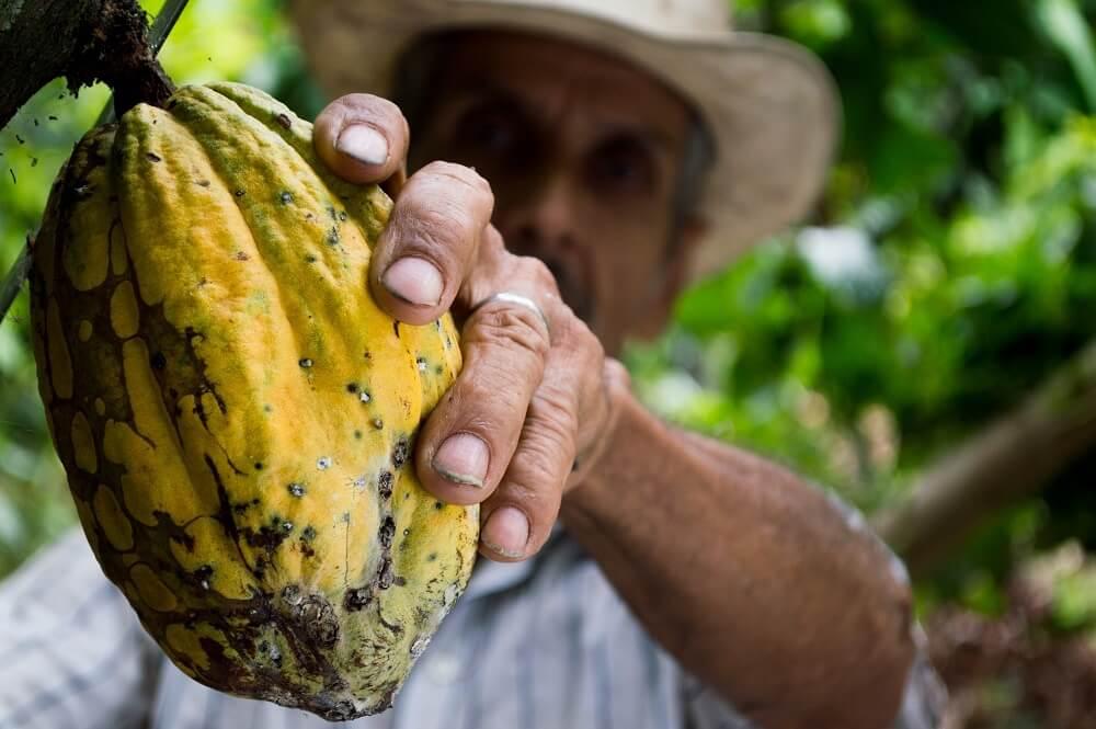Kakaobohne Anbau Kleinbauer