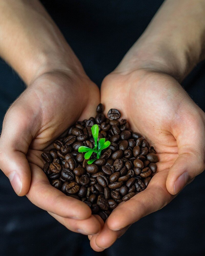 Kaffeebohnen Bio Fairtrade