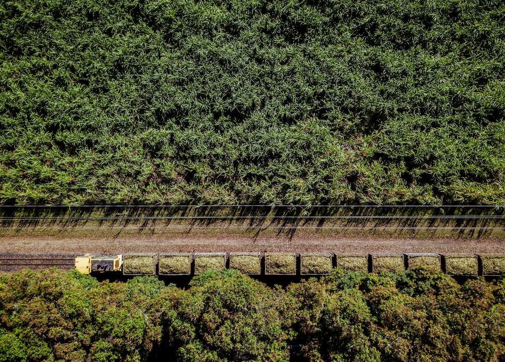 Zuckerrohrplantage in Kolumbien