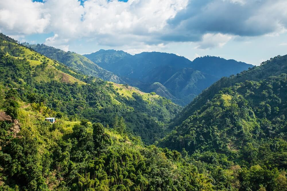 Jamaica Blue Mountain Kaffee Natur