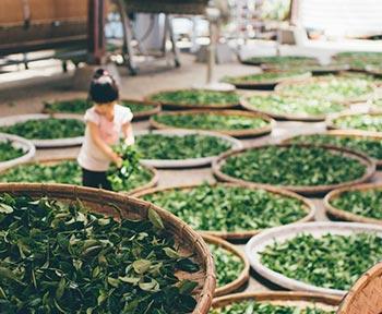 Teezeremonie in China