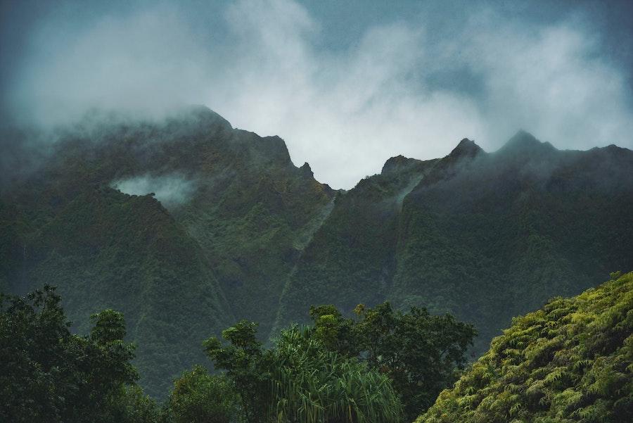 Geisha Kaffee Anbaugebiet im Nieselregen in Panama