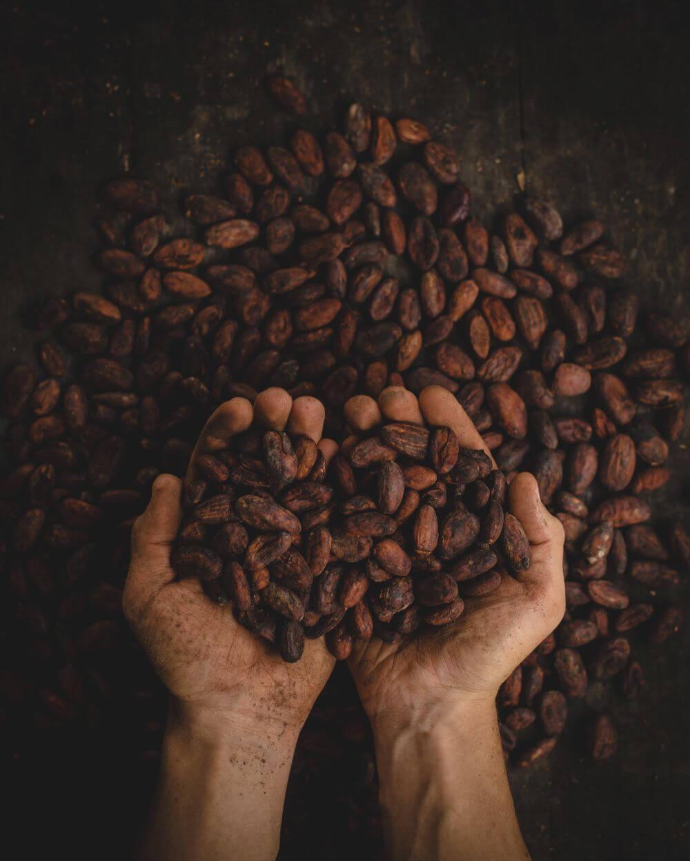 Mann hält Kakaobohnen in seinen Händen